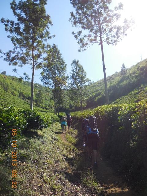 Trek awal kebun teh