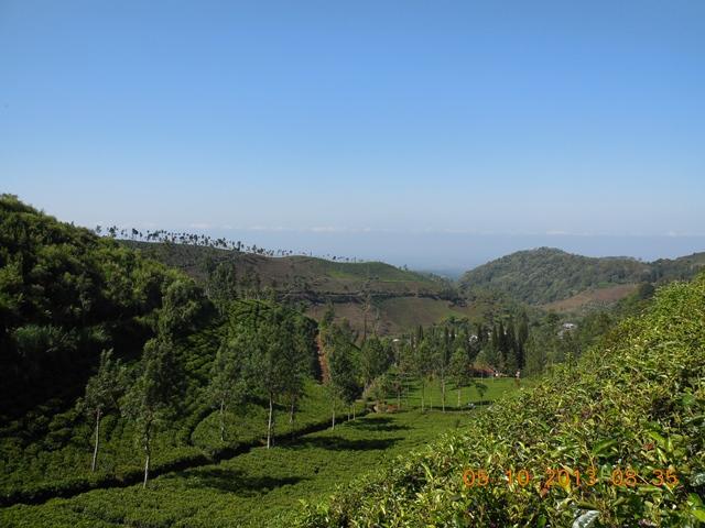 View kebun teh