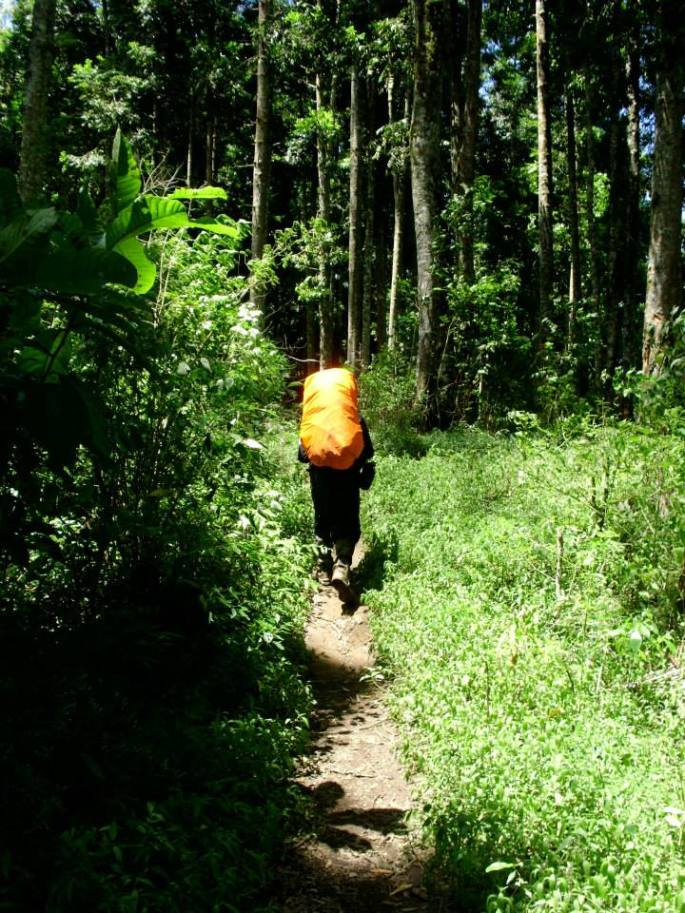 Hutan damar